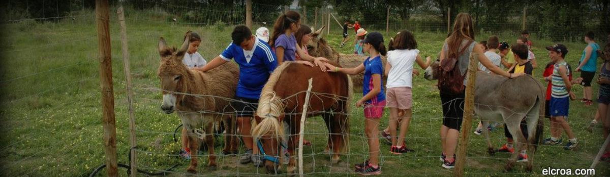 EMPATIZAR CON LOS ANIMALES A TRAVÉS DE LOS BURROS Y PONY DEL CROA