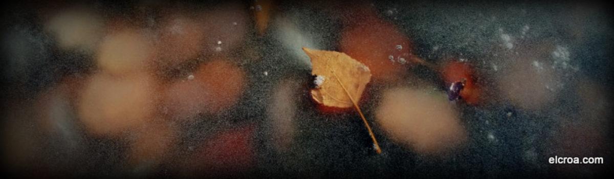 El otoño ha quedado atrapado en el invierno en el CROA