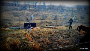 Retirada de cañas en el huerto por nuestros voluntarios