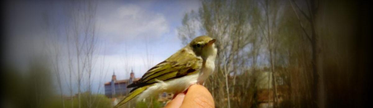 Las aves, seres fascinantes. ¡Ven a conocerlas!