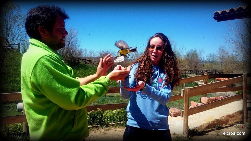 Liberando un ave que ha sido anillada