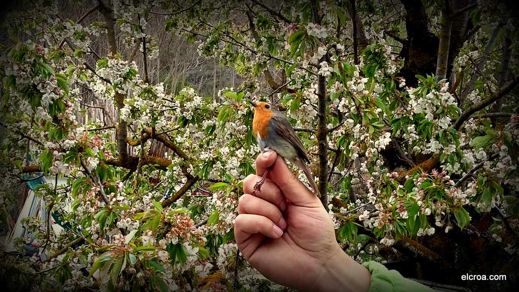 Educación Ambiental Anillamieno de Aves